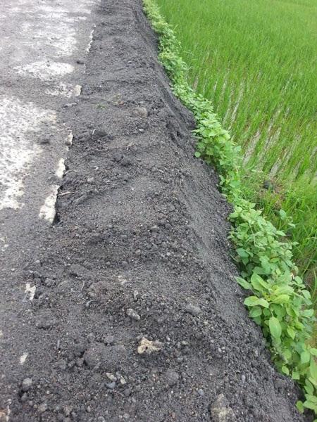 ... vương vãi bẩn thỉu và tràn cả xuống ruộng lúa.