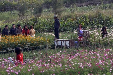 Ngỡ ngàng vườn hoa nhỏ bên luống đào Nhật Tân  - 4