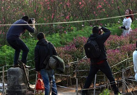 Ngỡ ngàng vườn hoa nhỏ bên luống đào Nhật Tân  - 5