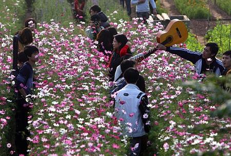 Ngỡ ngàng vườn hoa nhỏ bên luống đào Nhật Tân  - 6