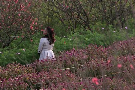 Ngỡ ngàng vườn hoa nhỏ bên luống đào Nhật Tân  - 12