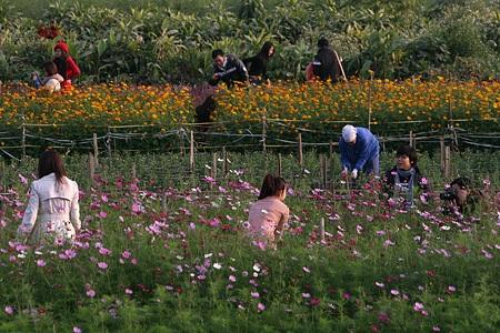 Ngỡ ngàng vườn hoa nhỏ bên luống đào Nhật Tân  - 13