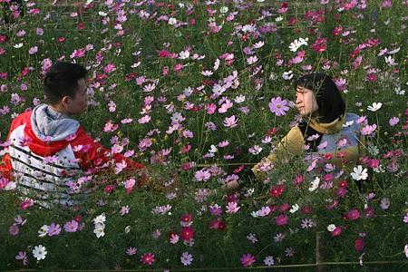 Ngỡ ngàng vườn hoa nhỏ bên luống đào Nhật Tân  - 15
