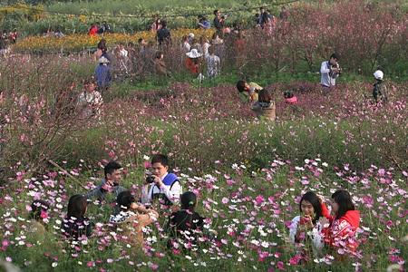 Ngỡ ngàng vườn hoa nhỏ bên luống đào Nhật Tân  - 16