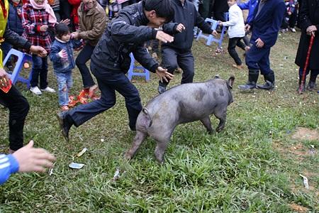 Tay không bắt... lợn - 11