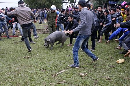 Tay không bắt... lợn - 8