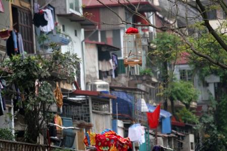 Những lồng chim trong khu phố cổ.