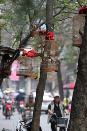Một lồng chim đơn lẻ trên phố Hàng Bồ.