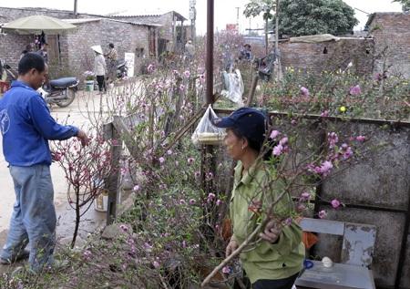 Các chủ vườn đào lập ngay một quán nhỏ tại vườn nhà để bán đào và hoa.