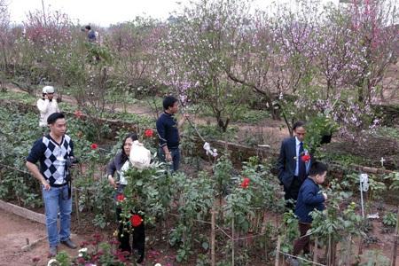 Một gia đình du xuân tại vườn đào Nhật Tân đồng thời cầu kì chọn hoa về chơi tết.