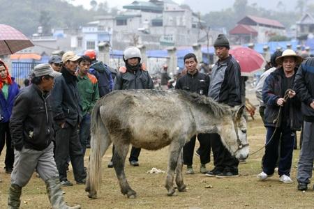 Một con ngựa lai lạ lẫm được cho là có nguồn gốc từ Trung Quốc, người dân dè dặt chỉ xem không mua.