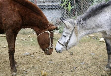 Những khoảnh khắc rất tình cảm của ngựa.