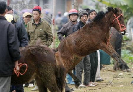 Chú ngựa non sợ người thỉnh thoảng lồng lên chạy khi đông khách xem.