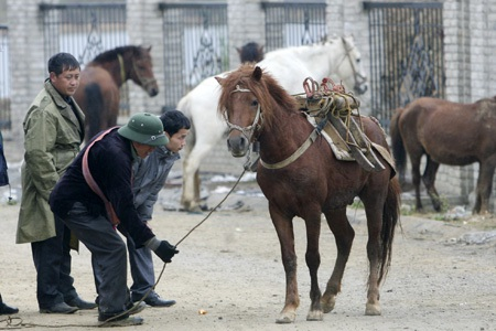 Có những lái ngựa từ tỉnh xa về đây để mua, mỗi chuyến hàng chục con.