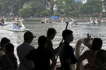 Mọi người tranh giành để được cưỡi thiên nga bơi hồ.