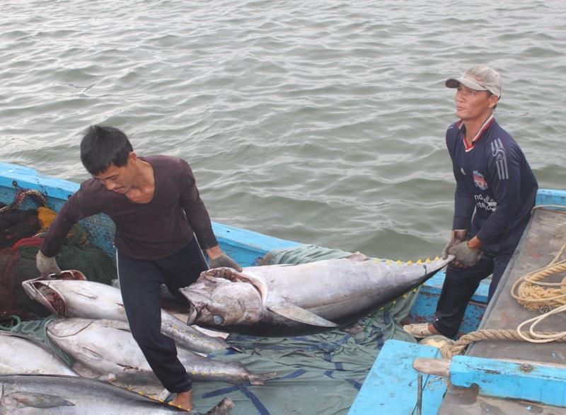 Cá ngừ đại dương được đưa lên xe tải đi tiêu thụ