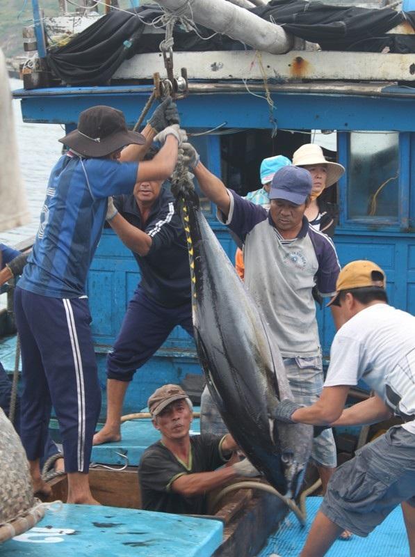 Tàu thuyền phải vào cảng sớm để bán cá tránh bão số 4