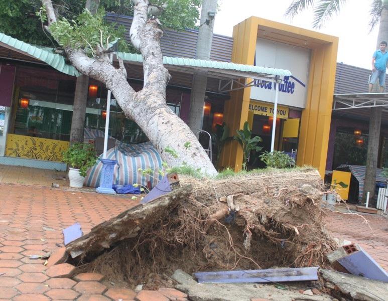 Cây cối đổ ngã ngổn ngang sau bão số 4