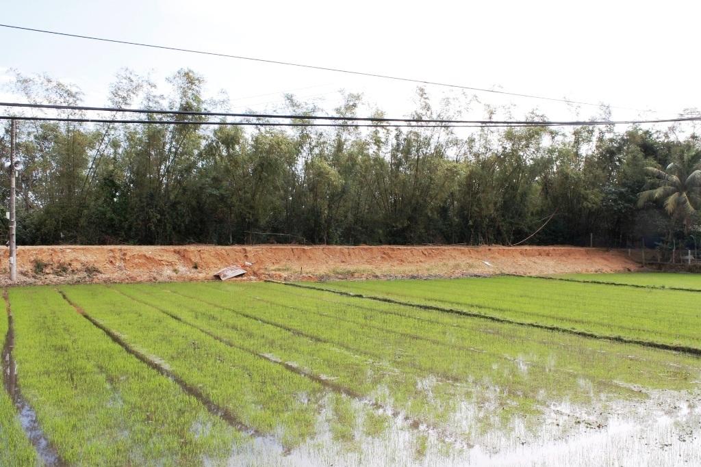 Vỡ đập trữ nước, hàng chục ha lúa bị bồi lấp