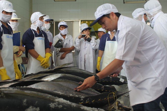 Nhật Bản chuyển giao 25 bộ máy đánh bắt cá ngừ đại dương