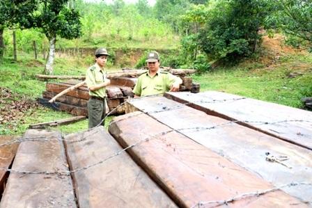 Số gỗ được đưa về Trạm kiểm lâm Dốc Kiềm (huyện Đông Giang, Quảng Nam) để chờ xử lý