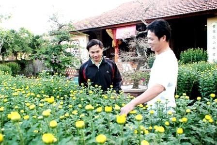 Người dân Lý Sơn đi mua hoa Tết về chưng