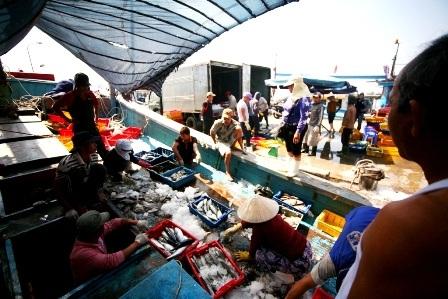 Âu thuyền Thọ Quang tấp nập cảnh mua bán cá vào ban ngày