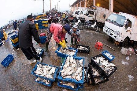 Đến khoảng 5 giờ sáng hôm sau, chợ cá Thọ Quang tan dần