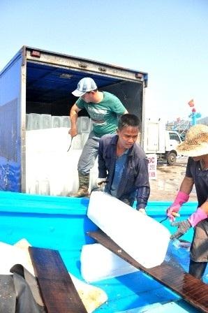 Đá cây được vận chuyển xuống tàu cá ĐNa 90463TS của ông Nguyễn Thăng (Đà Nẵng)