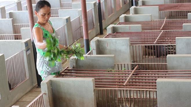 Trại nhím của ông Lâm ở Bình Chánh, TP.HCM