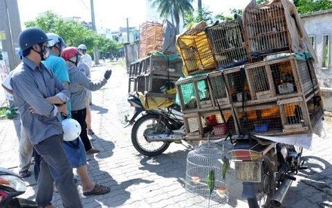 Nhiều người đến tìm mua chim