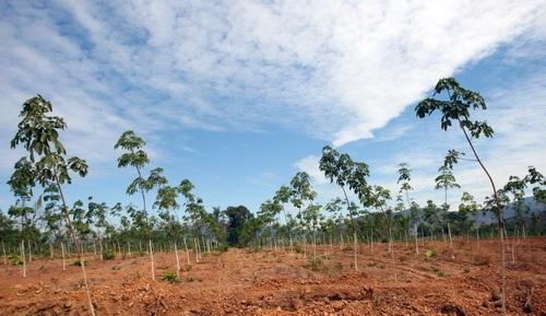 Bầu Đức cũng đổ hàng trăm triệu đô vào các dự án trồng cao su, khai thác quặng tại Campuchia.