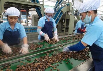 Công nhân đang chế biến hạt điều để xuất khẩu tại một công ty ở Bình Dương.