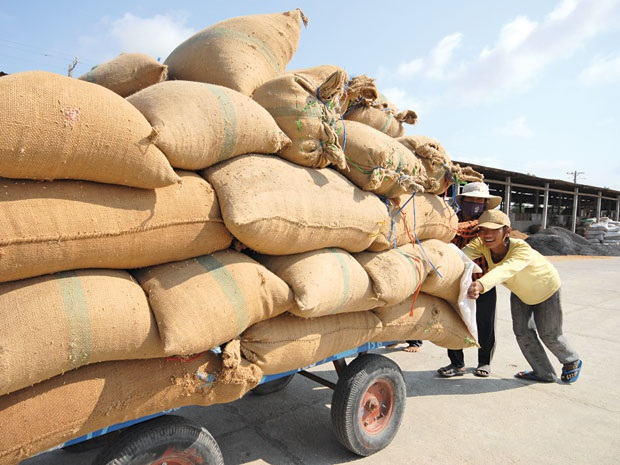 Người nông dân luôn mong muốn bán được lúa với giá tốt...