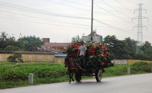 Ông Chương với chiếc xe ngựa chất đầy vòng hoa đi ra từ nghĩa trang Văn Điển.