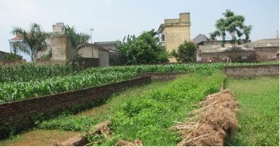 Đất đã chia lô giờ cũng chỉ để trồng ngô, trồng lạc.