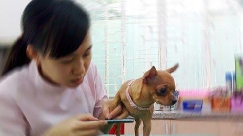 Thú cưng được giũa móng, chải lông tại các tiệm spa.