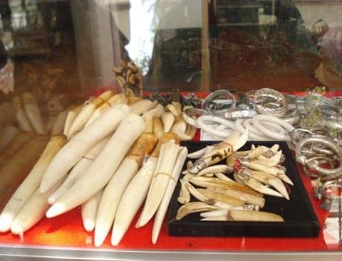 Ngà voi và nanh vuốt của các loài mãnh thú được bày la liệt trong những chiếc tủ kính.