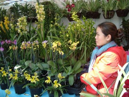Địa lan nở sớm vừa được trưng bày vừa được bán tháo ở phiên chợ hoa Đà Lạt sáng 29/12.
