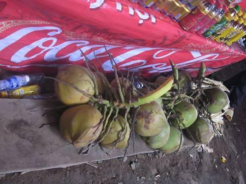 cảnh những quả dừa giá 175.000 đồng