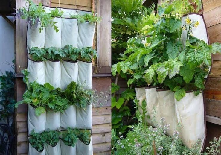 Nhiều người còn sáng tạo, lấy vải may túi gắn lên tường trồng đủ các loại rau ăn lá, ăn quả