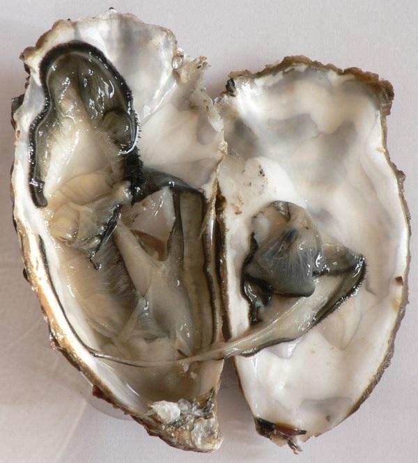 Hải sản do Biological Vietnam Seafoods xuất khẩu mang chất lượng cao