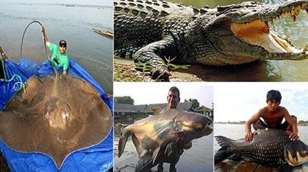 Lợi đâu chưa biết nhưng chắc chắn các loài thủy sản trên sông Mekong sẽ bị tuyệt diệt