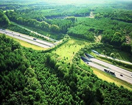 Cây cầu bao phủ màu xanh bắc qua đường A20, gần Grevesmühlen, Đức
