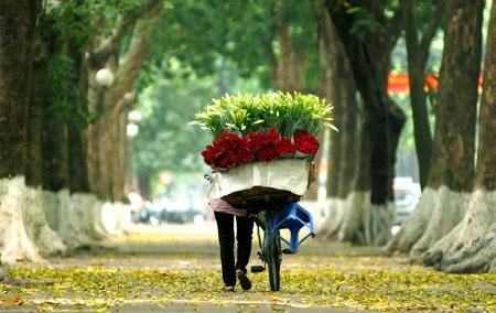 Những hàng cây xanh được quy hoạch khoa học dọc các tuyến phố ở Singapore