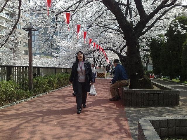 Người dân Nhật bản đi dạo dọc theo con đường với hai bên là cây hoa anh đào nở tại thủ đô Tokyo.