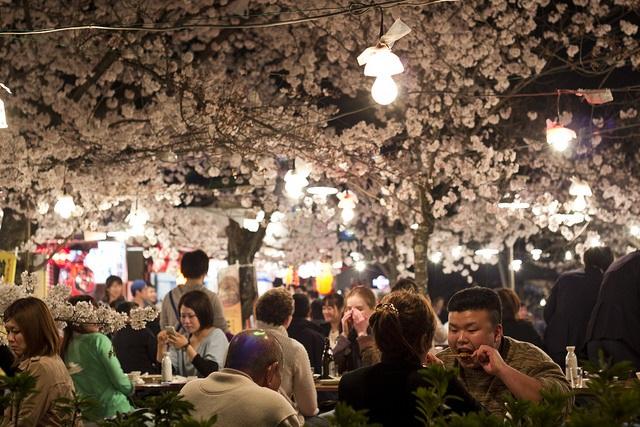 Lễ hội Hanami ở công viên Maruyama, Kyoto.