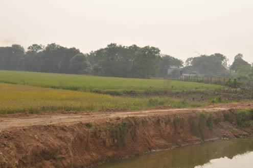 Giữa cánh đồng đất lúa hai vụ có một trang trại như thế này tồn tại (X).