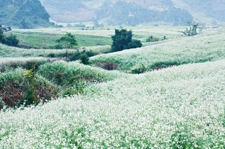Những thung lũng hoa hút tầm mắt