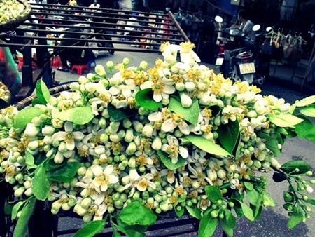 Màu hoa đơn sơ mộc mạc đậm chất thôn quê lại là món hàng thanh tịnh được nhiều người ưa thích